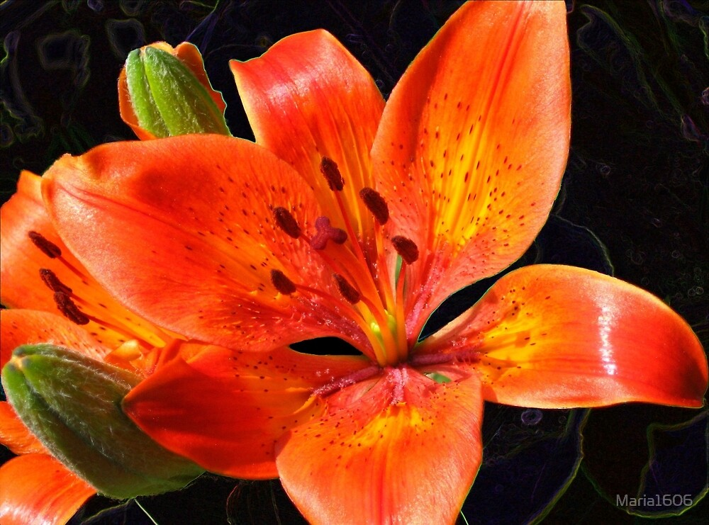 Lily fire by Maria1606