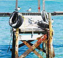 birds on jetty  by weeties