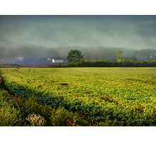 A Yellow Field Photographic Print