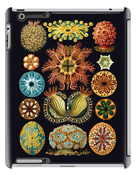 Haeckel illustration by monsterplanet