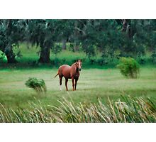 Whispering Winds Photographic Print