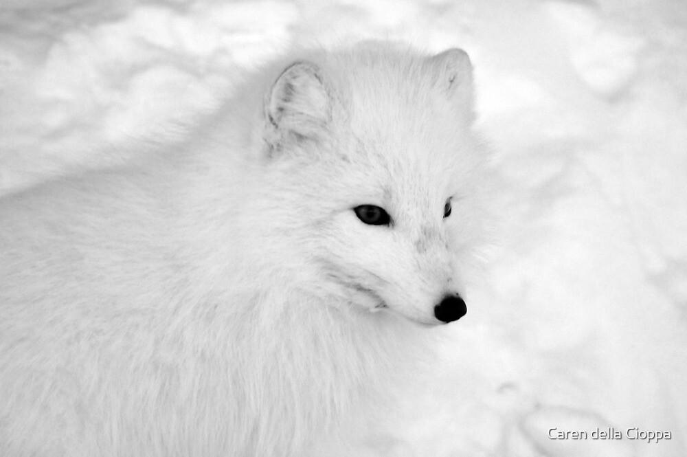 Arctic Fox by Caren della Cioppa