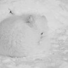 Sleeping Arctic Fox by Caren della Cioppa