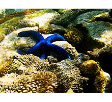 Blue Sea Star - Great Barrier Reef Marine Park Photographic Print