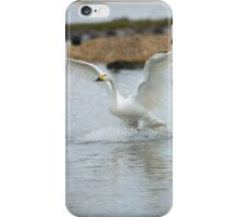 Bewick's swan about to land on water with wings outspread iPhone Case/Skin