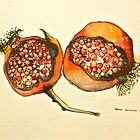 Pomegranate. Pen and wash 2012 framed 42x32cm. FOR SALE at lizmooregolding@gmail.com  by Elizabeth Moore Golding