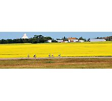 Canola Fields and Cyclists Photographic Print
