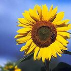 Bright Golden Yellow  Summer Sunflower  by nidredbubble012