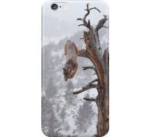 Cougar leaping off tree iPhone Case/Skin
