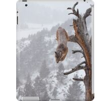 Cougar leaping off tree iPad Case/Skin
