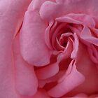 Swirls of Pink by Leanne Davis