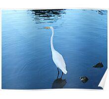 Poignant Lake Anza Swan Poster