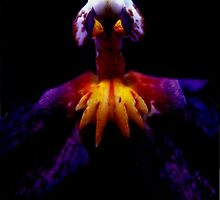 Incensed - A New Perspective on Orchid Life by ©Ashley Edmonds Cooke