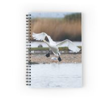 Bewick's swan about to land on water with wings outspread Spiral Notebook