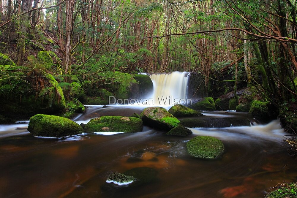 Back on the Baw Baw Plateau  by Donovan Wilson