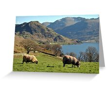 Rams at Buttermere  Greeting Card