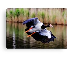 A Pie In The Sky  ~ Magpie Goose ~ Canvas Print