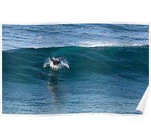 Master Surfer Poster