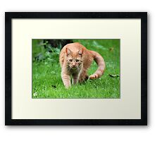 Dickens a little Tiger - So Full of Life Framed Print
