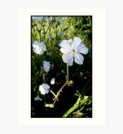 wild flowers of Greek nature Art Print