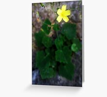 wild flowers of Greek nature Greeting Card