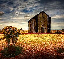 Dungeness  fishing hut  by Dean Bedding