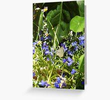 Cabbage Moth - 10 11 12 Greeting Card