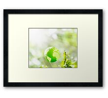 green globe Framed Print