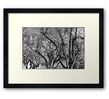 Crazy Tree Sky Framed Print