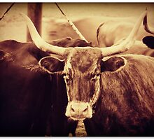 Longhorn Cow by Christine Ertl