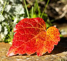Autumn Leaf by mikebov