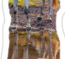 Horse Magic in reflection Sticker