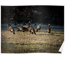 Flock Of Wild Turkeys Poster