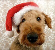 Skittle at Christmas  by SusieMcLaren