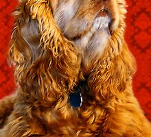 Cocker Spaniel Against Lace by Samantha Dean