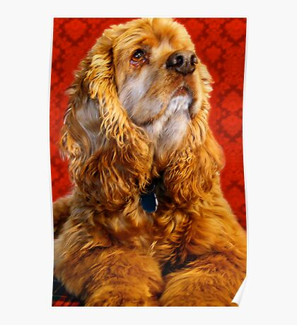 Cocker Spaniel Against Lace Poster