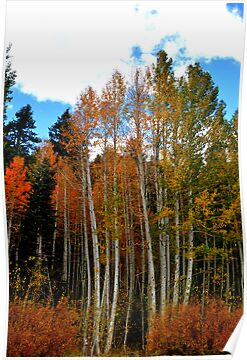 """Long Legged Aspens"" by Lynn Bawden"