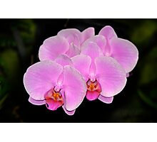 Pink Orchids, all in a row Photographic Print