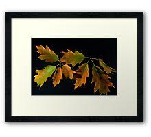 Oak Leave, 2 Framed Print