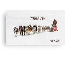 Dog Sledding Metal Print