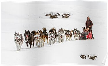 Dog Sledding by Patricia Jacobs CPAGB