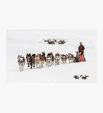 Dog Sledding Photographic Print