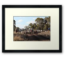 Moving The Cattle Framed Print