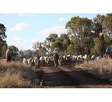 Moving The Cattle Photographic Print