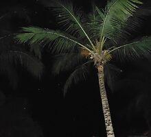 palm trees by Kassmatick