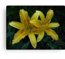 Lily fun Canvas Print