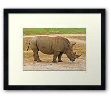 Southern white rhinoceros Framed Print