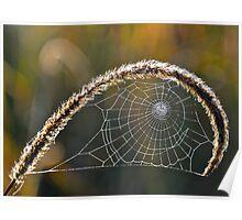 Fibonacci Spider. Poster