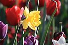 Daffodill by NinaJoan