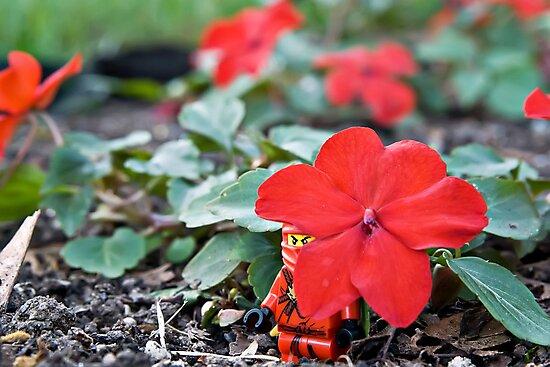 Red Ninja Petals by Dan Phelps